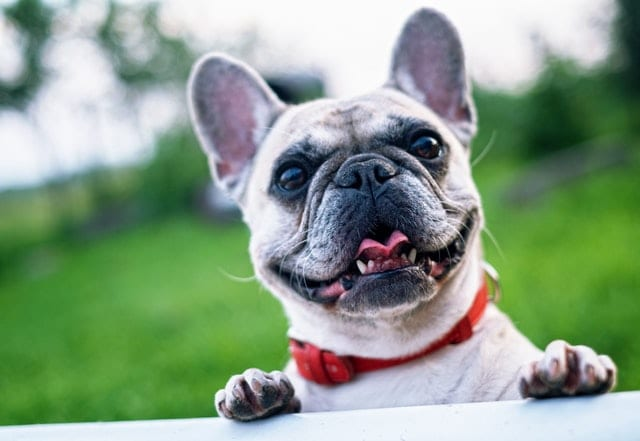 If you are looking for the perfect CBD Pet products to gift this holiday season, we've got you covered@  Check out this awesome CBD for Pets Gift Guide